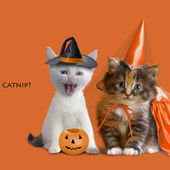 Animals in Halloween costumes. I`m sure they hate it, but my God, are they cute.