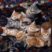 Meow! Can you count us? How many?