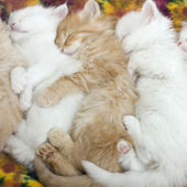 How many sleepy kittens?
