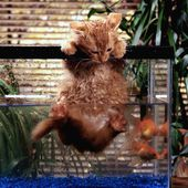 Have u seen a fishercat? :D