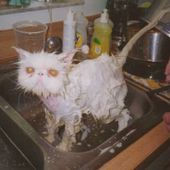 Do you enjoy your bath, kitty?
