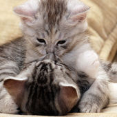 Kissing kitties