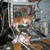 Tech support kittens