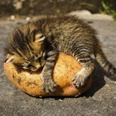 Kitty & potato - a rare relationship