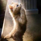 A praying kitten