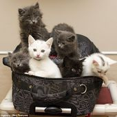 kitties in the suitcase