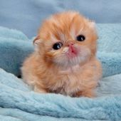 Cute little kitty