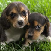 Two lovely puppies! Do we like you?
