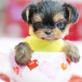 Would u like to take the cup of puppy away? ;-)