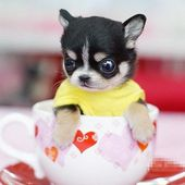 pup in the cup