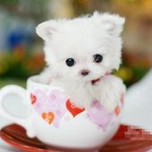 Would u like a cup of puppy? ;-)