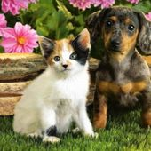puppy and kitty