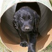 pup in the tube