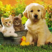 Cute puppy and some kittens
