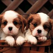 Adorable puppy twins!