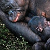 animals motherhood