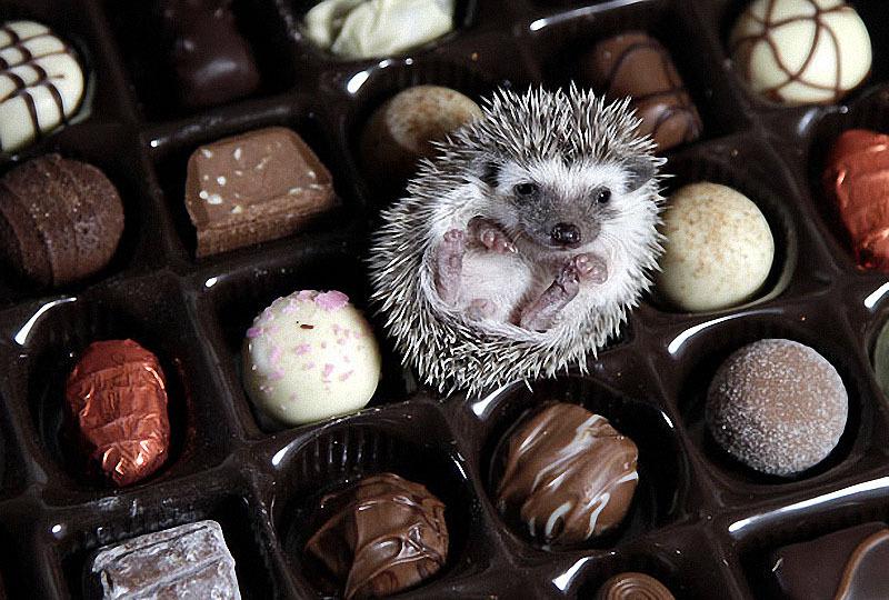 Resultado de imagen de cute animal eating  chocolate