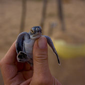 Cute baby turtle
