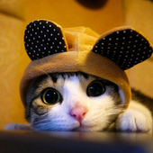 I\'m a bear kitty but that\'s ok!