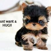 Could u gimme ur hugs?
