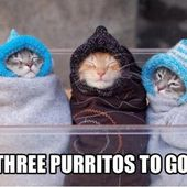 Which purrito do you like the most? (: