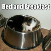 Would u like to go to bed after breakfast? (: