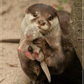Proud momma with cute baby otter