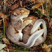 Lovely squirell babies!