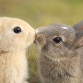 Bunny's first kiss!