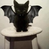 I\'m a kitten, not a bat! Do u love me?