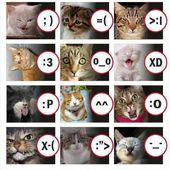 Cats emotions. Can they feel it?