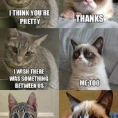 Grumpy Cat interview