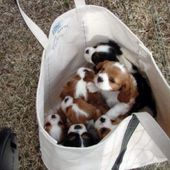 bag with puppies