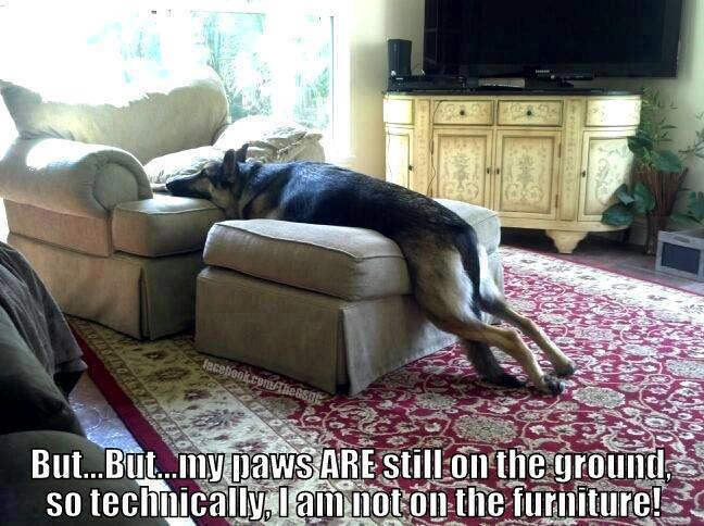 I\'m not on the furniture!