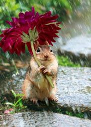 Squirrel with flower umbrella
