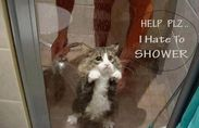 I don't like to take a shower!