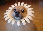 Do I look like a flower?