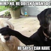 Lol! Lovely puppies!