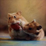 Hamsters love strawberry!
