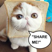 I'm an Inbread kitten! Share me!
