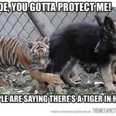 You gotta protect me!
