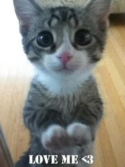 Love me please!