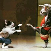 Fighting, Kung-Fu cats!