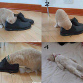 Why does kitty like smelling shoes?‎