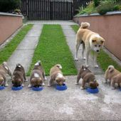 Very hungry puppies!