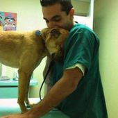 Dog saying thanks to the vet treating him!