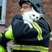 Firefighter rescues cat from burning house