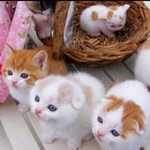 What an adorable kittens!