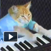 Video: Keyboard Cat!