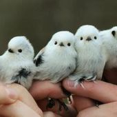 Cutest little birds